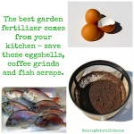 DIY Organic Garden Fertilizer
